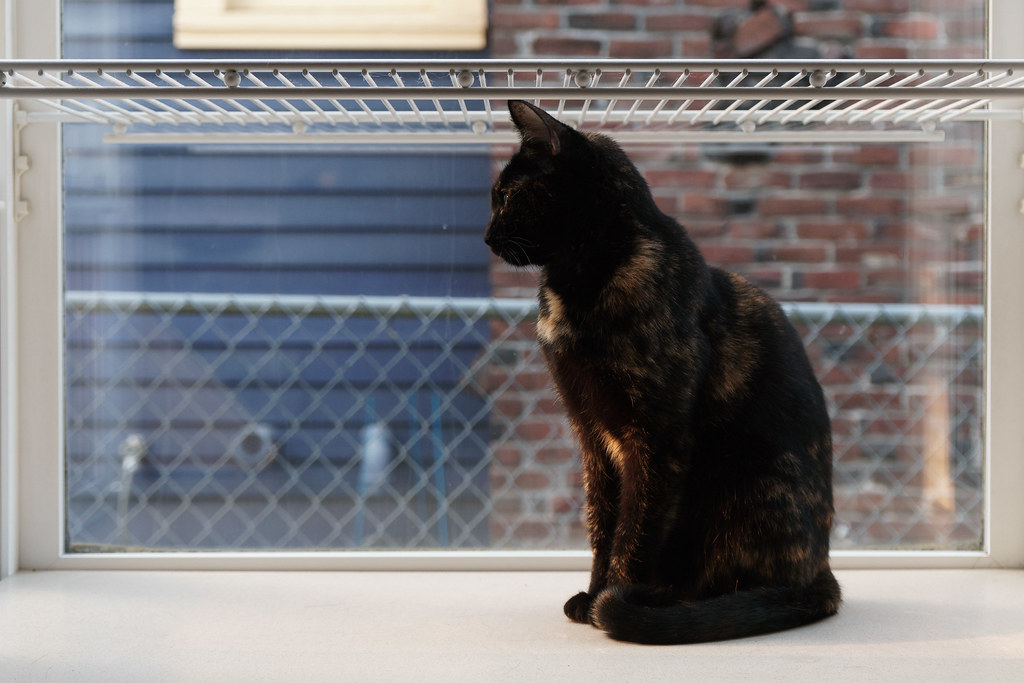 Our cat Trixie watches the setting sun from the kitchen window