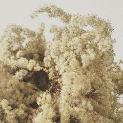 Fluffy #goldenrod bouquet