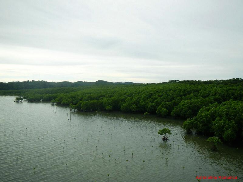Cabarruyan Island Mangrove Forest