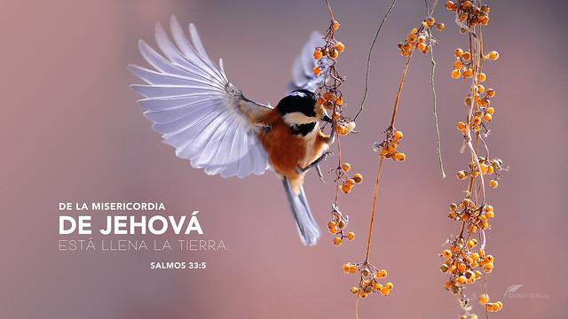 De la misericordia de Jehova esta llena la tierra