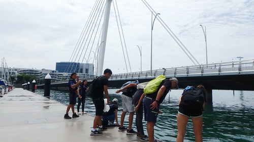 Tour of corals at Marina at Keppel Bay
