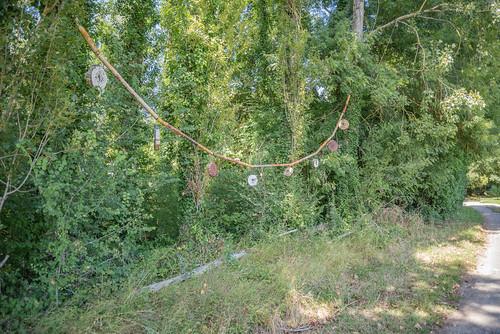 04-Bambou et coupes de branches