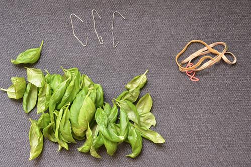1. Pluck basil leaves.