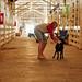 The Escape. A Drama in the Goat Barn