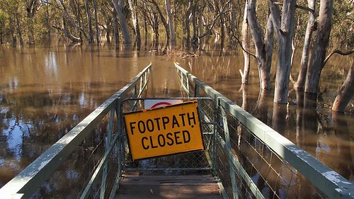Really? Floodwaters on the Edward River, Deniliquin, New South Wales