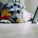 Little bored friend por xavifajardo