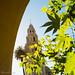 Balboa Park, San Diego (1 of 1)