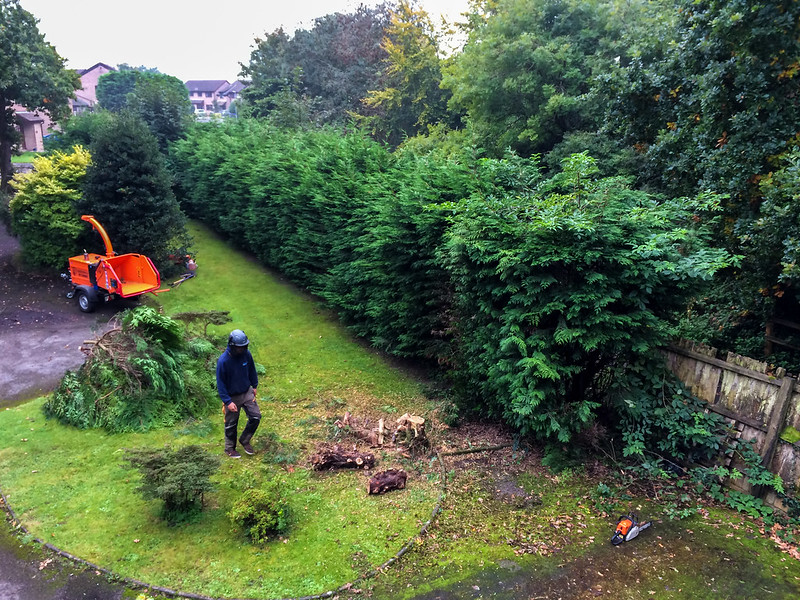 Work starts to remove the monster hedge