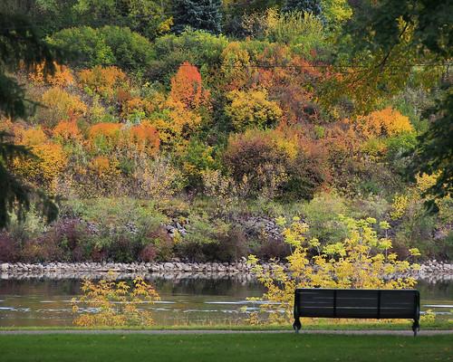 olympus omd em5 autumn fall saskatoon saskatchewan canada southsaskatchewanriver trees bench