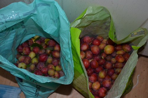 plums Aug 17