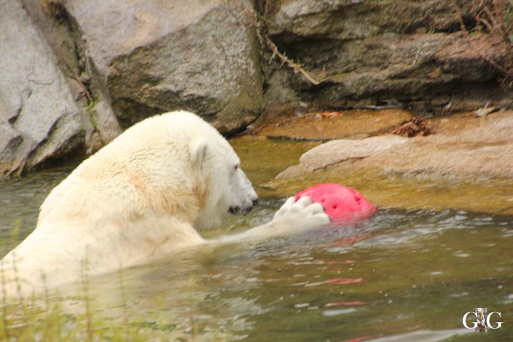 Besuch Zoo Berlin 13.08.17124