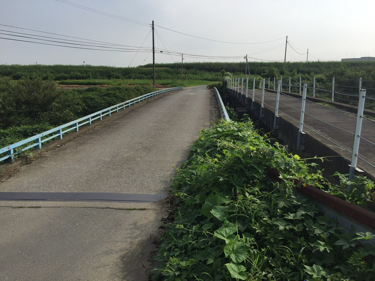 20170826_Arakawa Long Run (15)