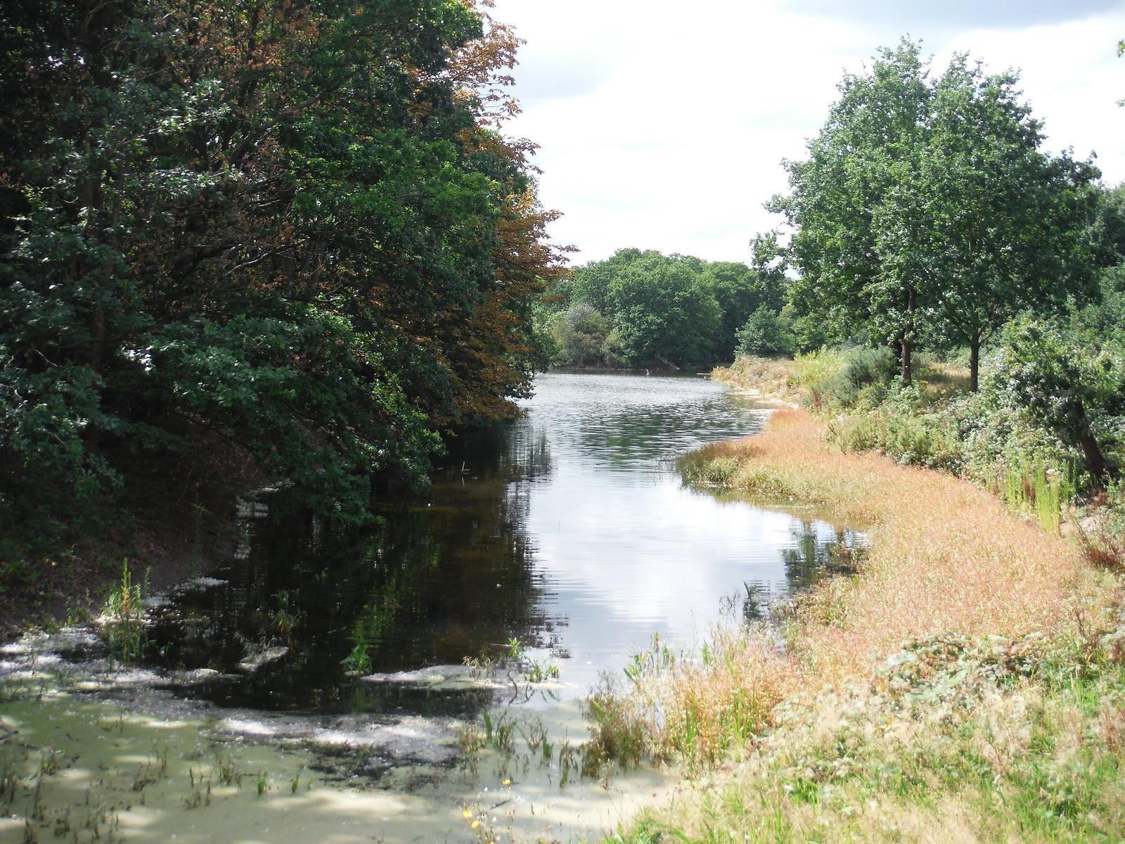 Heronry Pond SWC Walk Short 11 - Wanstead Park