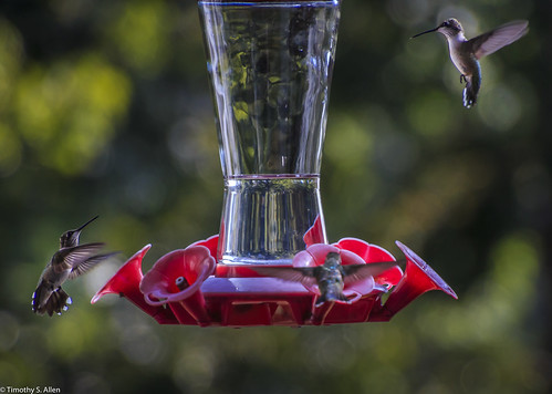 georgia newnan animals feeder hummingbirds nature feeding hovering