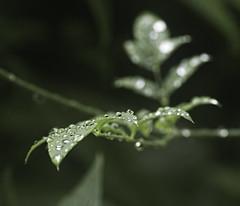 Raindrops02
