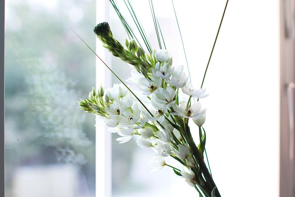 kukkia01