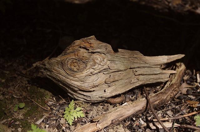 2017_0822Dead-Wood-Detail0001
