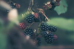 Dodgy berries ~ 249/365 2017