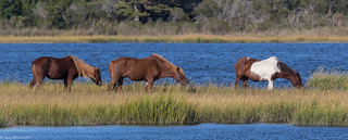 Assateague National Seashore | by Craig Schriever
