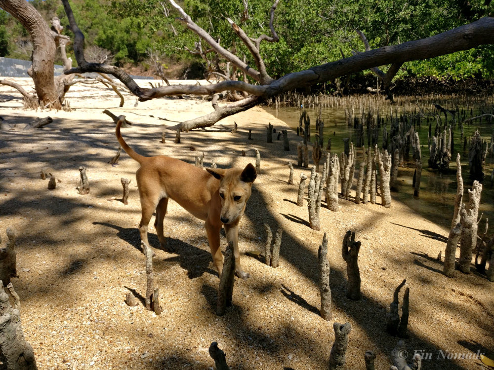 Beach dog Lombok