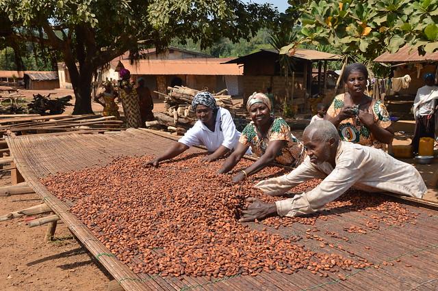 Kaakaonviljelijöitä. Kuva: People in Need, Ghana. Make Chocolate Fair -kampanja / Eettisen kaupan puolesta ry
