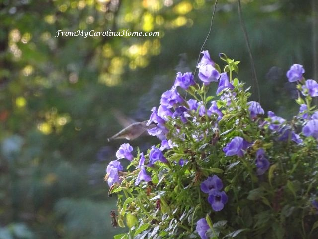 September in the Garden at From My Carolina Home