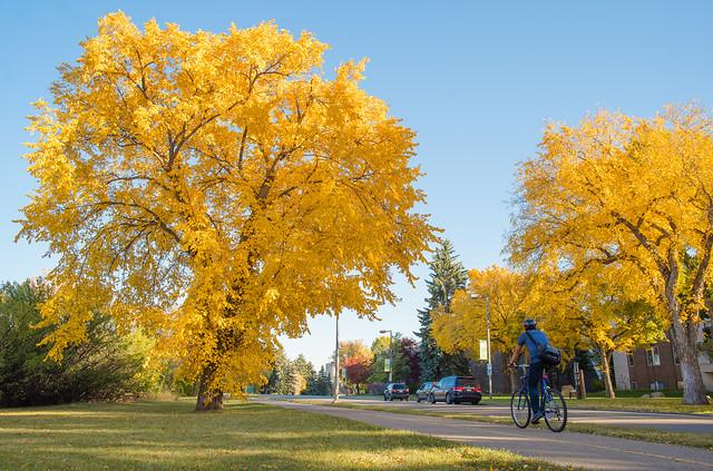 Biking in Yellow