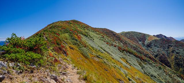 ジャンクションピークから下って来た紅葉の稜線を振り返る