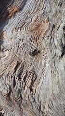 La fourmi en vadrouille