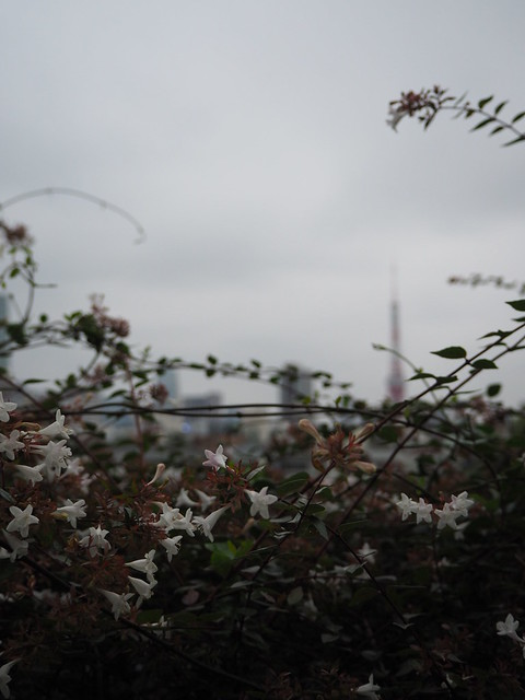 roppongihills_TokyoTower_flower