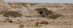 Israel-Negev-39566_20140422_GK.jpg
