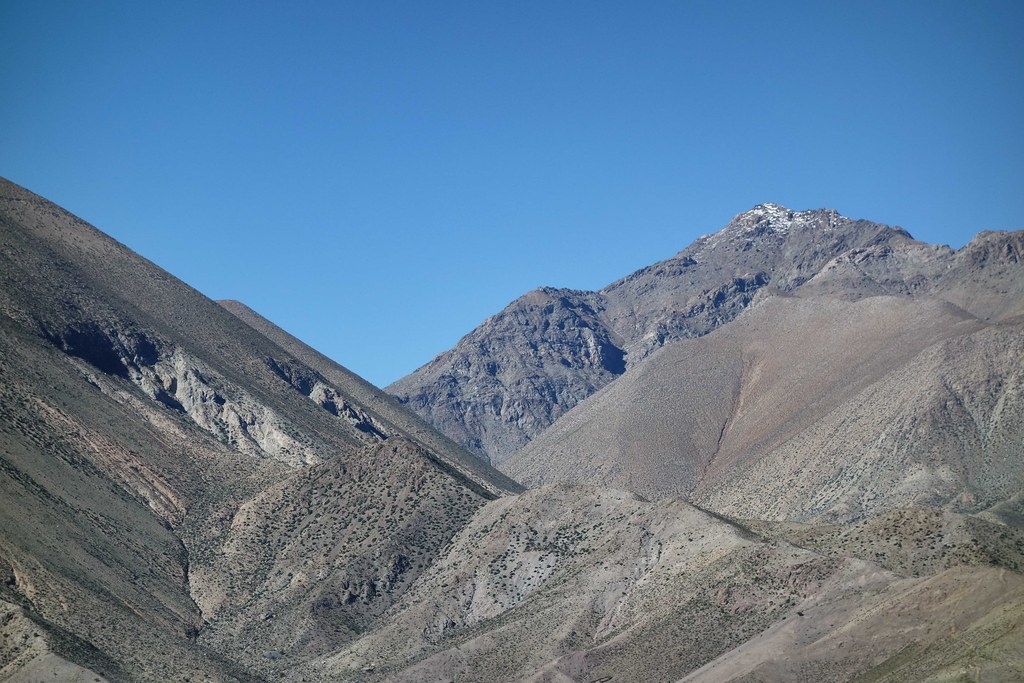 Vicuna - Valle de Elqui 2