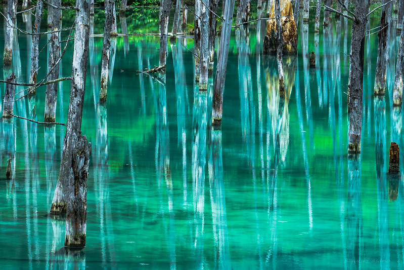 Blue pond,Biei,Hokkaido