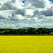 Eastern Ireland Countryside-29