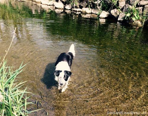 Sat, Aug 19th, 2017 Lost Female Dog - Ennis Lane, Swords, Dublin