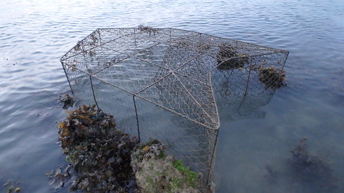 Large fish trap at Terumbu Semakau, Aug 2017