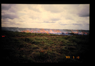 Direct Seeding Of Macro-pelleted Legumes Into Burnt Savanna = マクロペレットによるマメ科牧草のサバンナへの火入直播