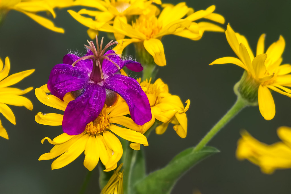 Wild-Flowers-19-7D2-083017