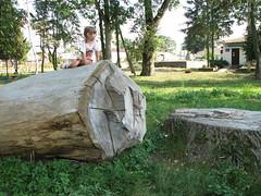 Дерево завалила:)