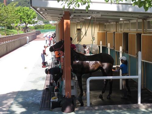 小倉競馬場の乗馬センターの厩舎