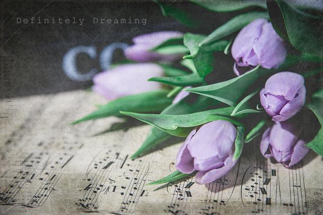 Forgotten Tulips