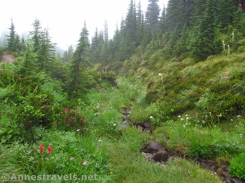 A little stream along the Timberline Trail en route to McNeil Point, Mount Hood National Forest, Oregon