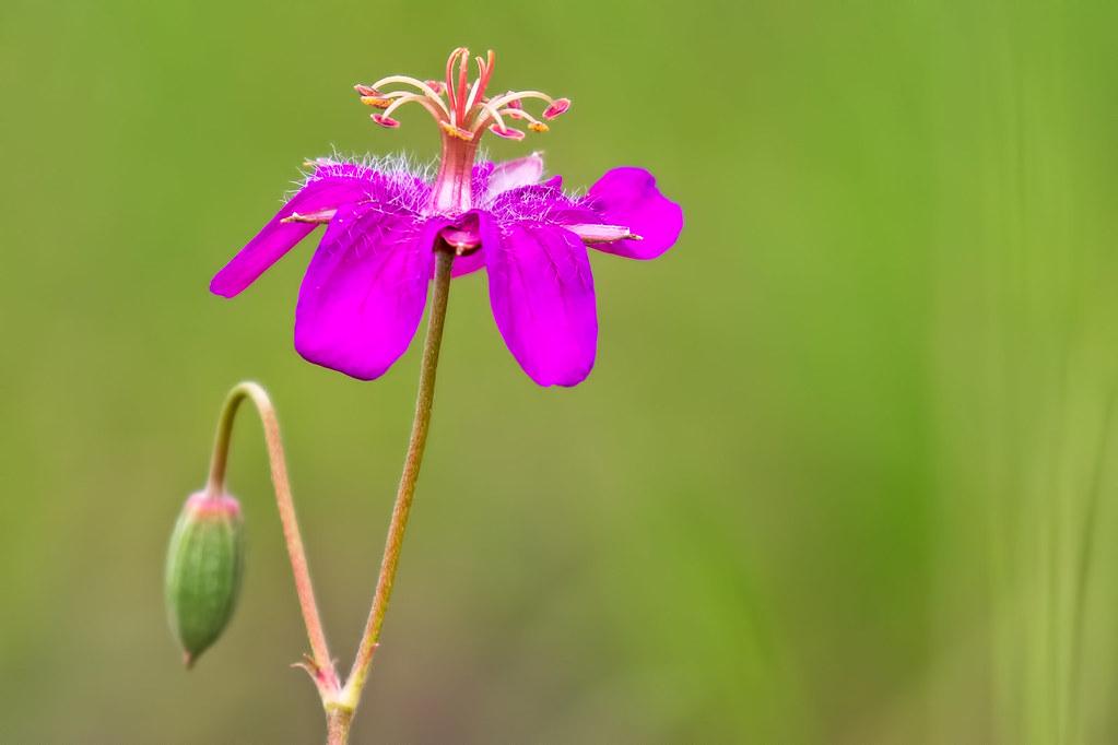 Wild-Flower-16-7D2-081517