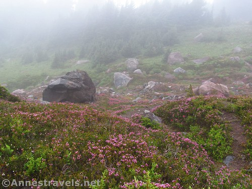 Blooming heather and the very misty meadows on the high reaches of the McNeil Point Trail