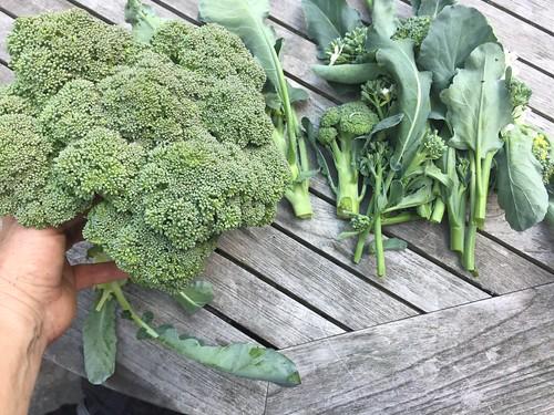harvest IMG_1642