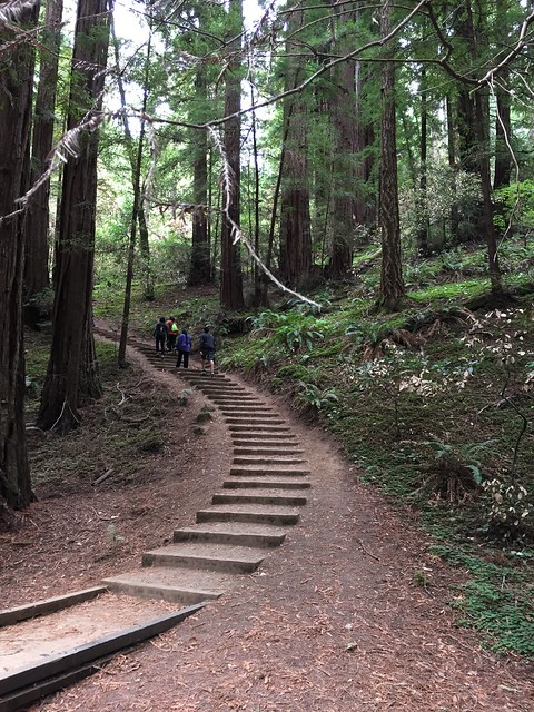 Muir Woods Steps