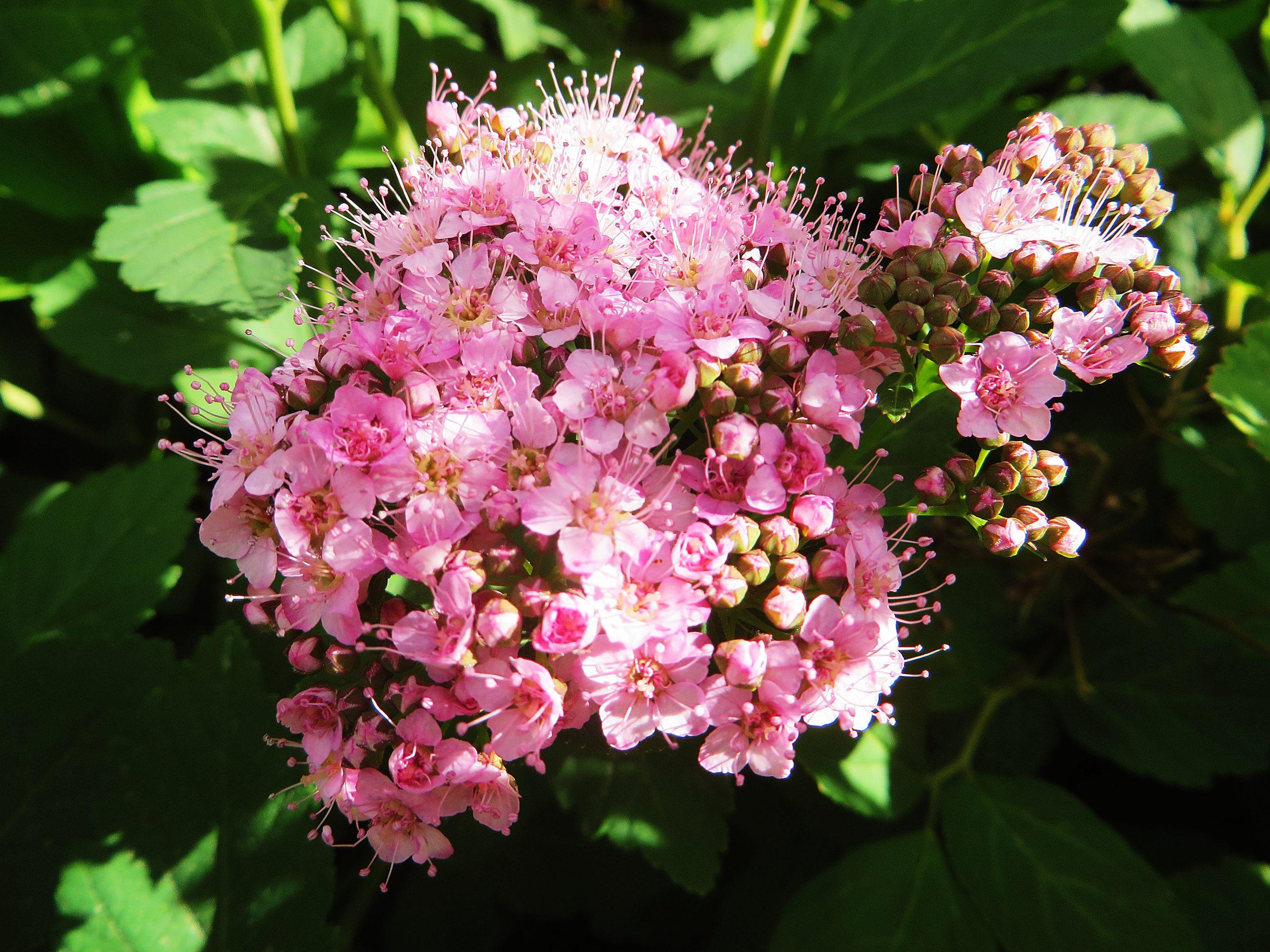 kukkijat16