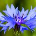 Paysages et Nature-Fleurs by Art Phil Photographie