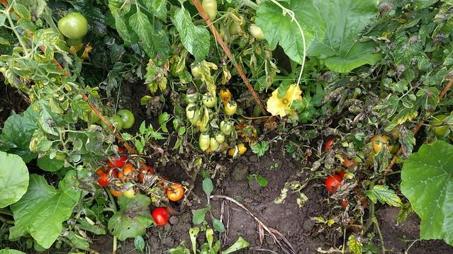 samentuin, volkstuin, moestuin, ecologisch tuinieren, moestuingeluk