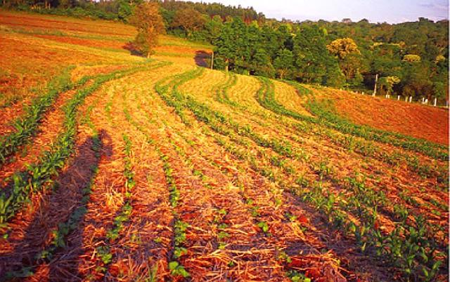 Propriedade familiar em Santa Catarina corrigiu o solo, acabou com a erosão e hoje produz mais e melhor com técnicas agroecológicas - Créditos: Reprodução/Miguel Altieri